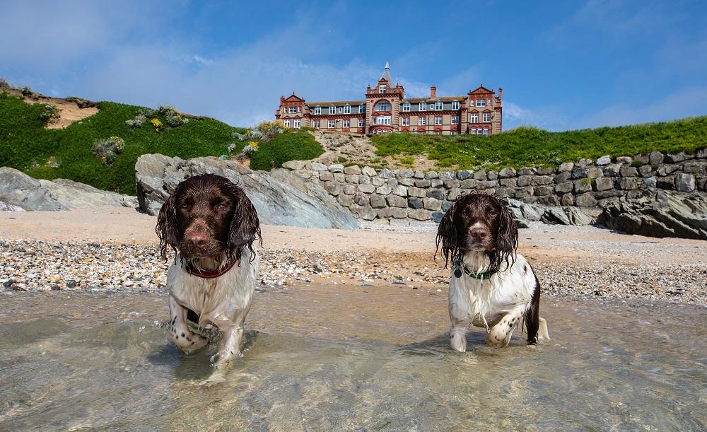 The Headland Hotel - Dog Friendly Hotel