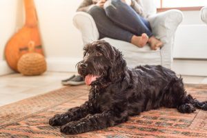 The Headland Hotel Dog Friendly Cottages