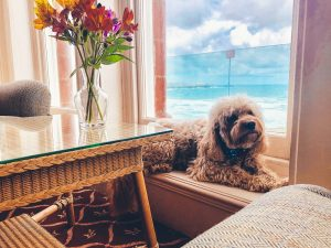 The Headland - Dog Friendly Rooms