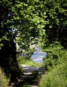 Gurnards Head Dog Friendly Path