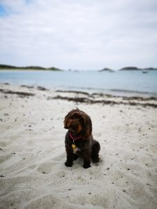 St Martins Dog Friendly Beach