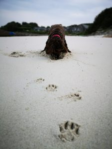 St Martins Dog Friendly Beaches