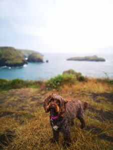 Mullion Cove Dog Friendly