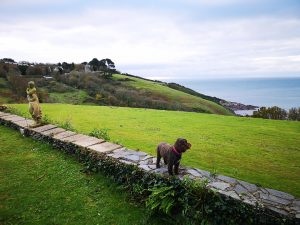 Talland Bay Hotel Dog Friendly