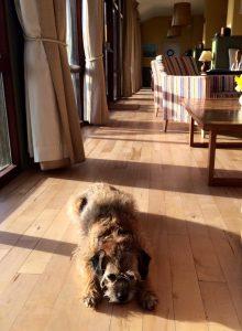 The Old Coastguard - Dog Friendly Hotel