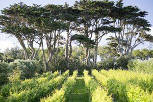holyvale vineyeard isles of scilly