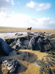 Sandymouth Beach dog friendly