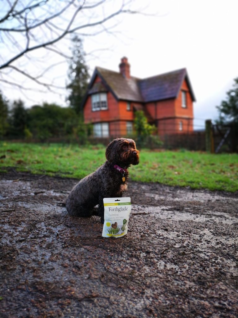 National Trust Forthglade Dog Friendly