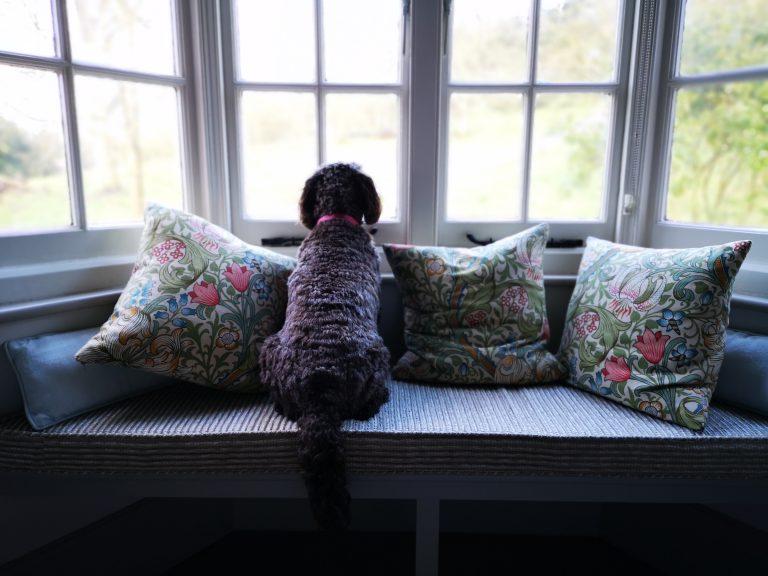 Killerton Park Cottage Dog Friendly Accommodation