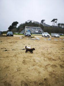 Dog Friendly Maenporth Beach