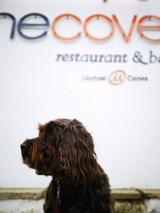 The Cove Maenporth - Dog Friendly