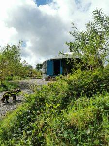 Dog Friendly Glamping Newquay Cornwall