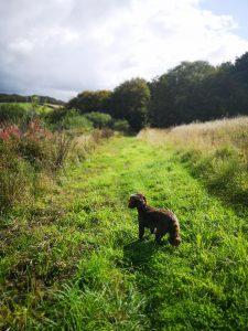 Fir Hill Estate Cornwall Dog Walk