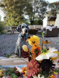 Dog Friendly Glamping Cornwall