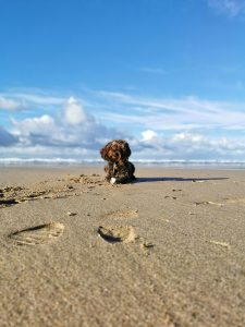 Dog Friendly Watergate Bay Beach